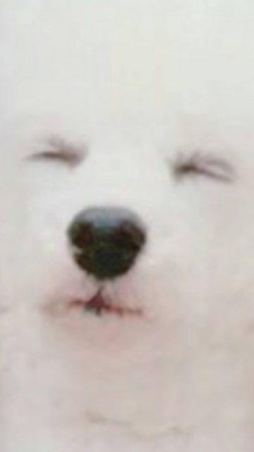 「癒されるペット写真コンテスト」途中経過報告♪